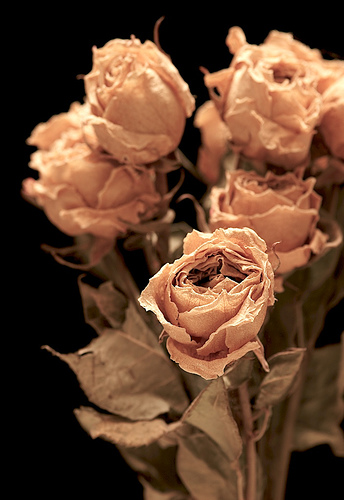 Dried_roses_2_3